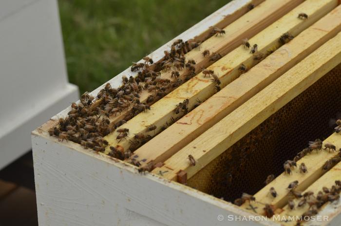 hive-7022