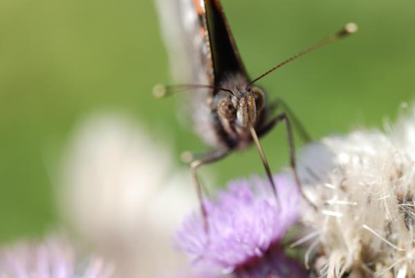 fly-0091