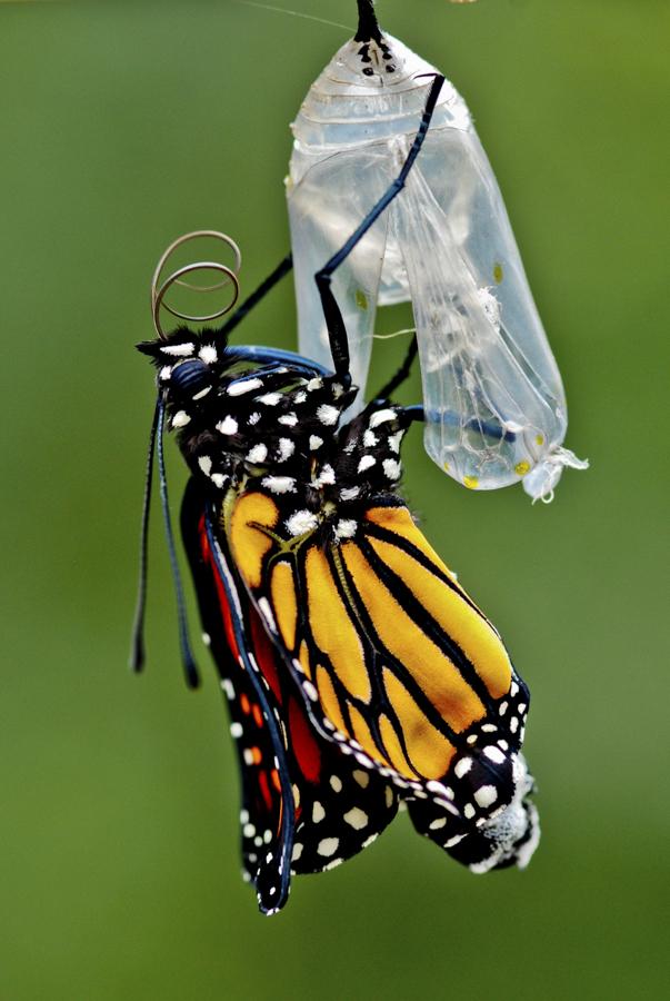 monarch2-0190