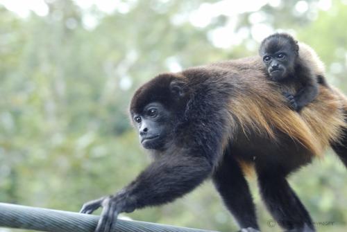 monkey-0448