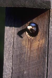 bluebird8-2