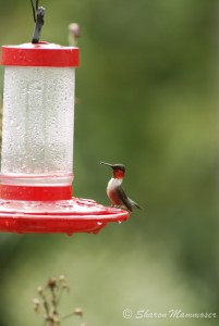 This is the kind of feeder I use--it comes completely apart for easy cleaning!