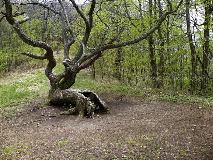 tree-0247