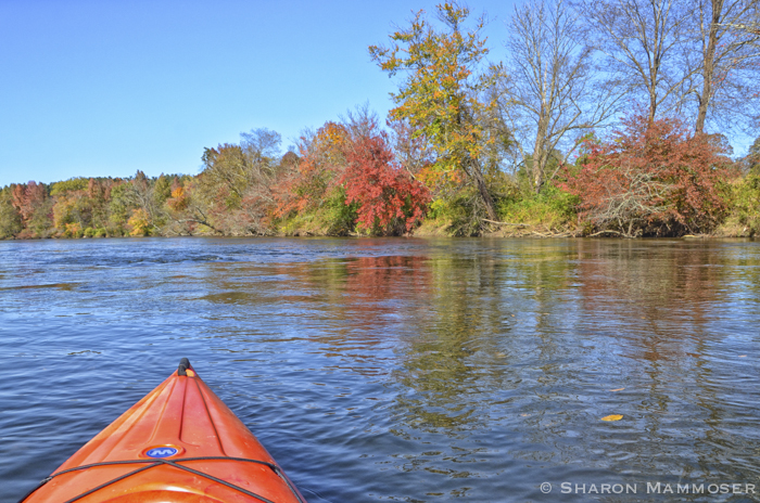 Kayaking on the French Broad