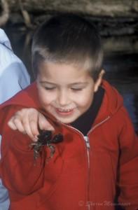 crayfish-024