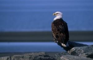 vulture-224