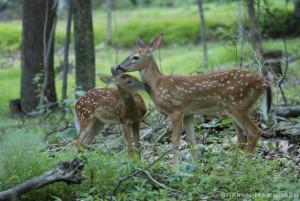 deer-0116