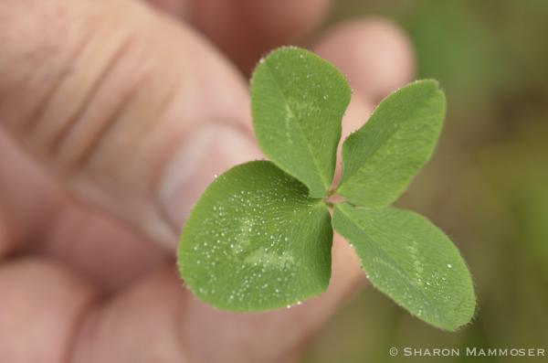 luck-4880