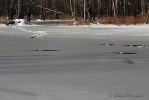 Otter holes in the ice