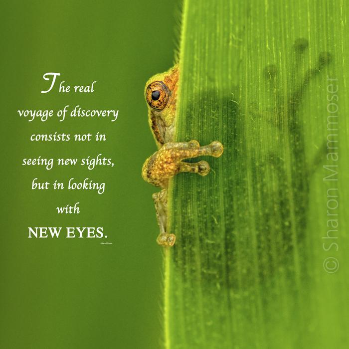 eyeshaveit-