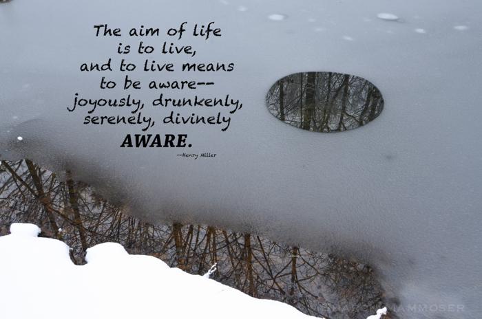 quote7-