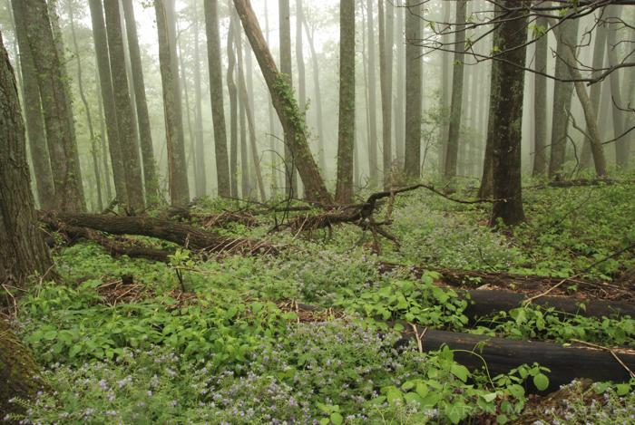 woods-0072