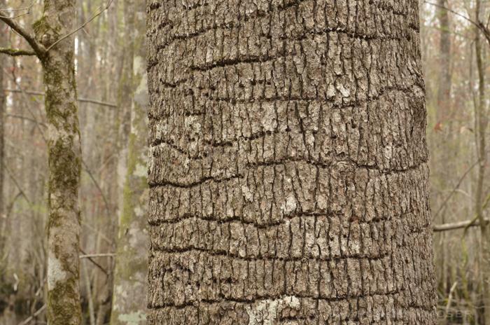 woods-3048