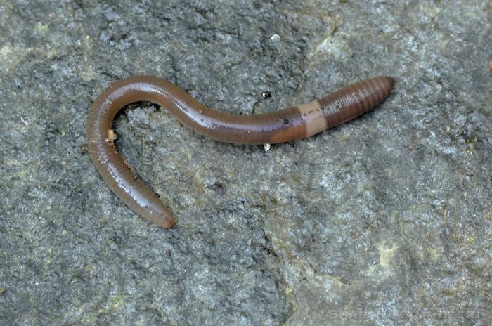 worm-4647