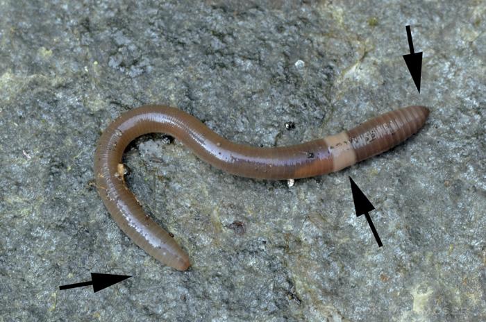 worm22-