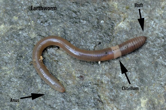 worm22worm-