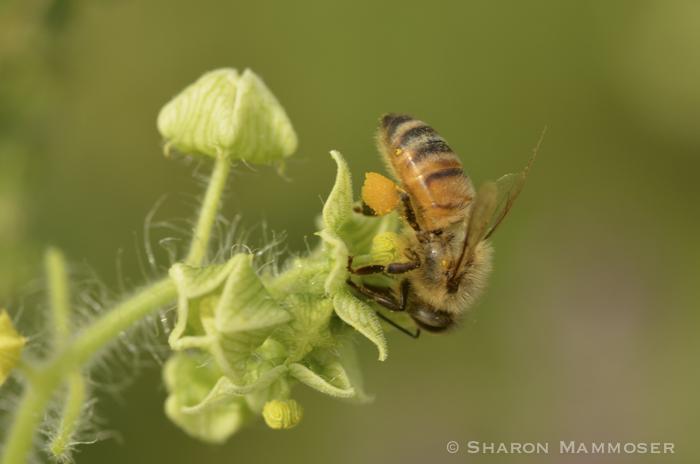 hive-5182