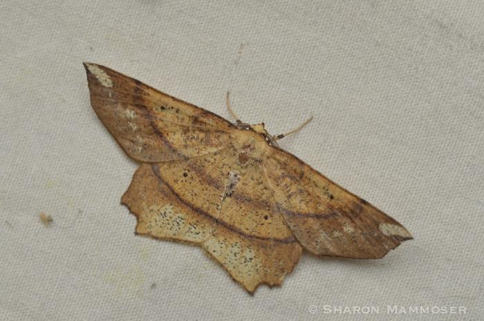 moth-5938