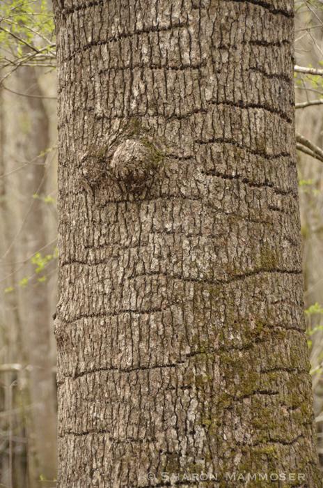 woodpecker-3052