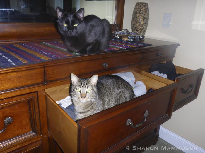 cats-1000345