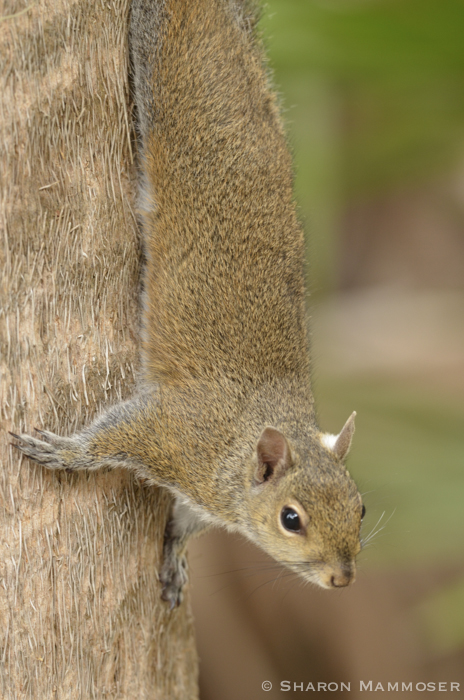 squirrel-2833