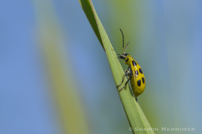 Beetles Are The Most Plentiful Animal Group On Earth There 500 Different Ladybug Species In North America And Over 5000 Worldwide