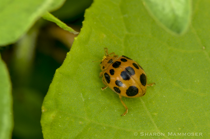 10 Things That Might Surprise You About Ladybugs