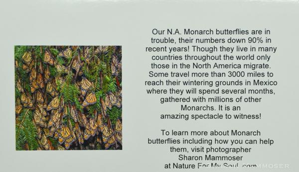 aa monarch-5430