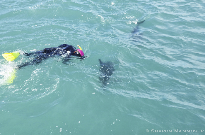 Here I am swimming with dolphins in New Zealand
