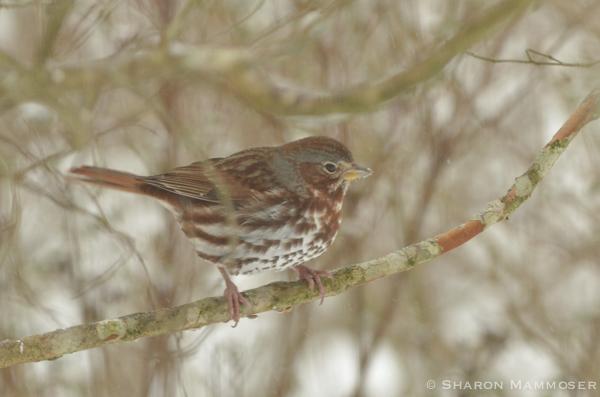 bird8-7279