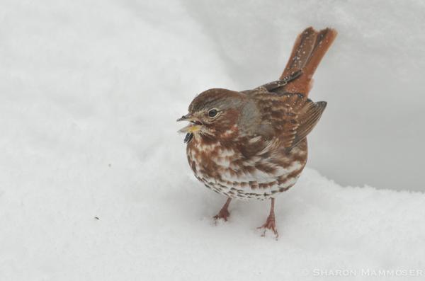 bird8-7284