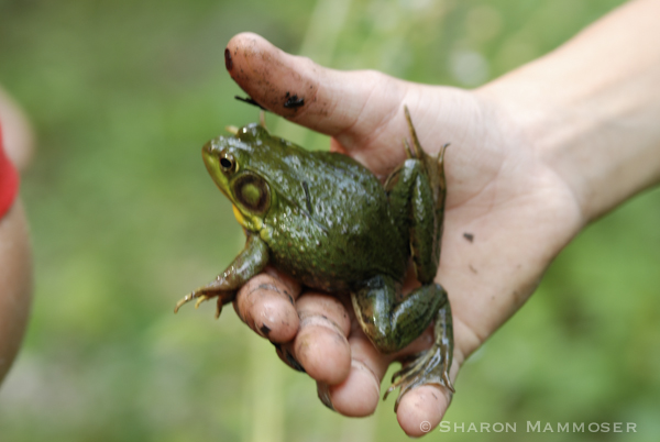 Frogs are slimy and hard to hold!