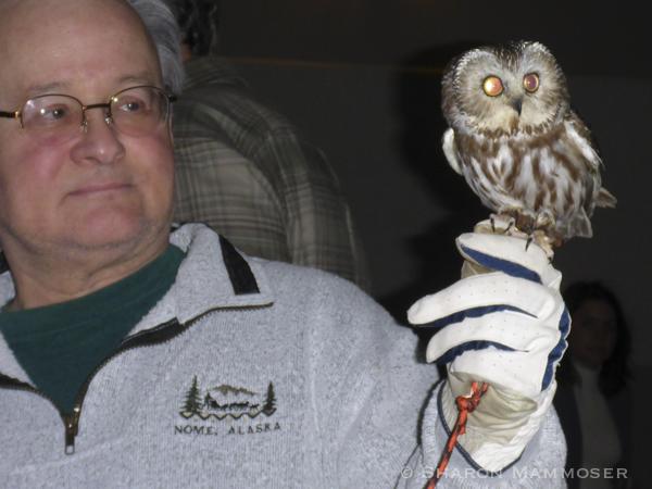 owl-1010375