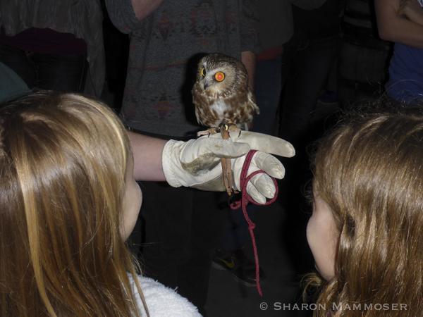 owl-1010382