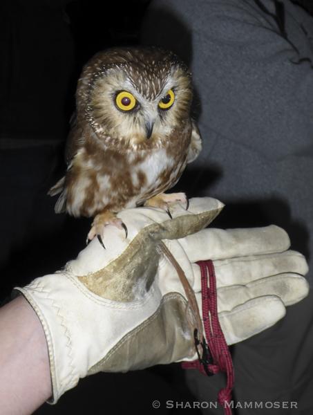 owl-1010392