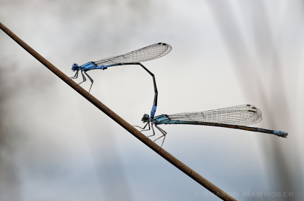 First, the male clasps the female behind her head.