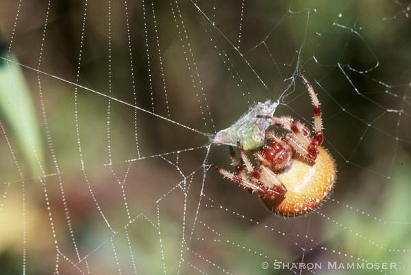 spider-054