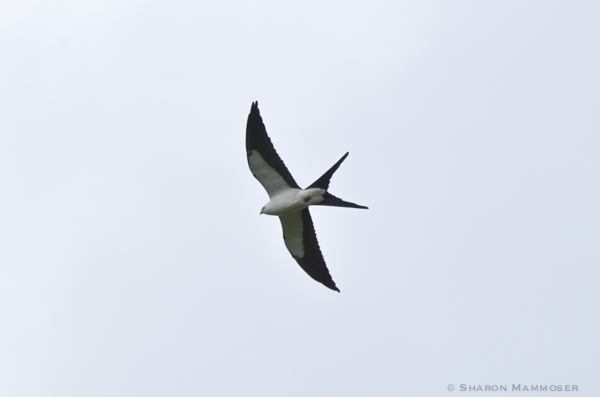 kite-2542