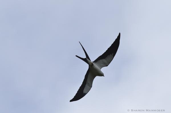 kite-2562