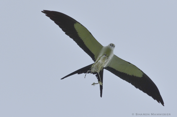 A kite with nesting material