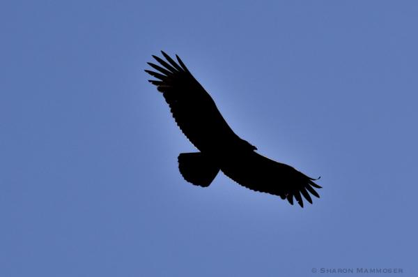 kite-7583
