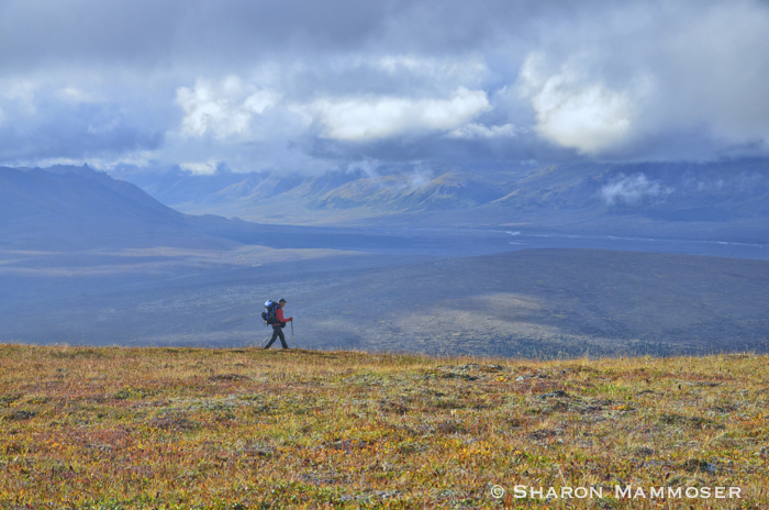 Hiking in the wilderness of Denali National Park