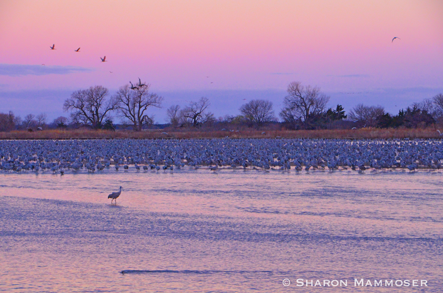 Sunset at the Platte River in Nebraska