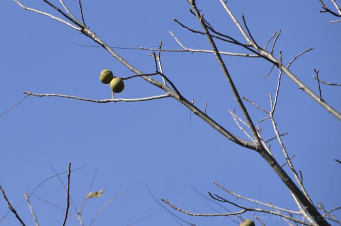 nuts33-3876