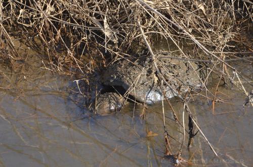 turtle2-5315