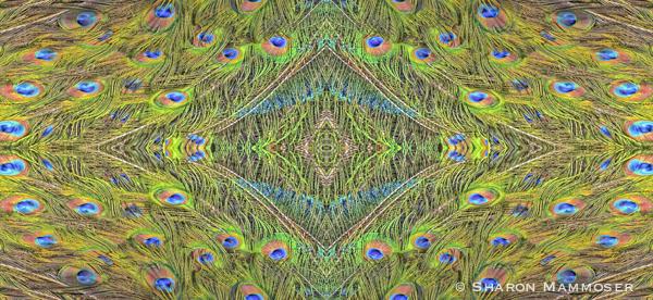 peacockkale-