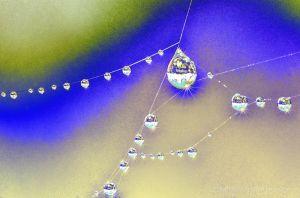 c78-web--4.jpg