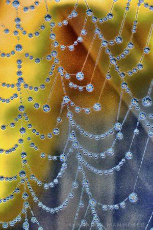 web2--11.jpg