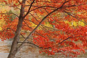 fall--10.jpg