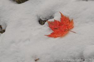 fall--11-c8.jpg